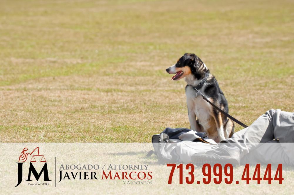 Leyes de correa para perros   Abogado Javier Marcos 713.999.4444